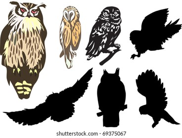 seven owls isolated on white background