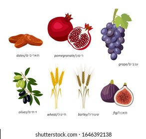 seven species of Israel: wheat, barley, pomegranate, grapes, figs, olives, dates with names in English and Hebrew. Without a background, isolated.