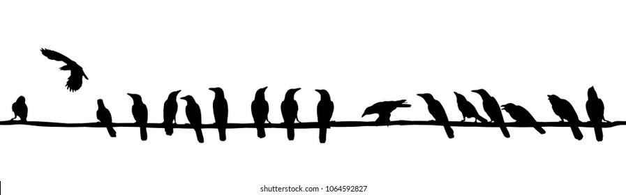Several rooks, Corvus frugilegus, sitting on wire lines. Vector image