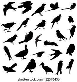 several silhouettes of several birds races