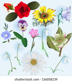 several type of flowers. Vector illustration