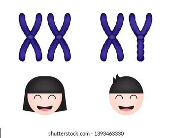 Sex chromosome, women and men