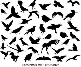 shadow of birds