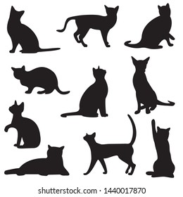 shadow of black cats isolated on white background