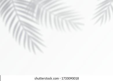 Shadow effects with tropical palm leaves in the corner. Flat lay background with tropical leaf shadow. Applicable for mockup, template background. Vector illustration