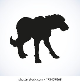 Shaggy big dog isolated on white background. Closeup side view with space for text