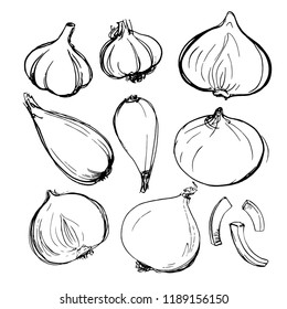 Shallot onion, onion, purple onion lettuce painted with ink on a white background. Sketch of vegetables with mascara and paint. Farm products.
