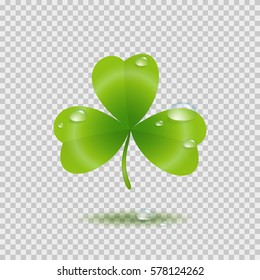 Shamrock leaf with water drops isolated on transparent background. Green irish symbol Good Luck. Vector clover icon for Saint Patrick's Day greeting card design