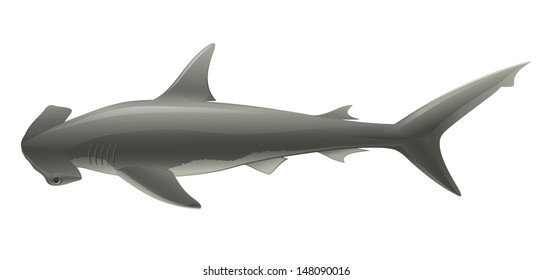 "Shark Hammer Head (Sphyrna) Isolated on White ""Full compatible gradients."""