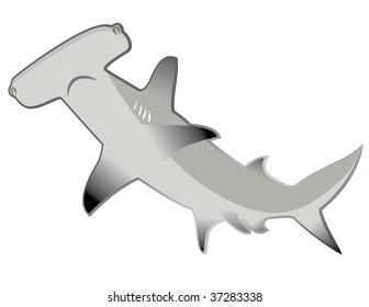 shark hammer head in vector mode