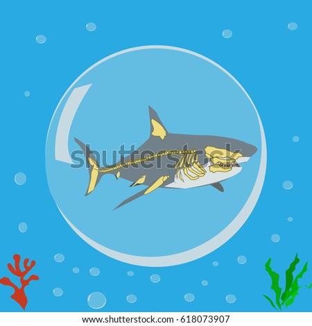Shark Icon Logo Symbol Skeleton Anatomy Stock Vector Royalty Free