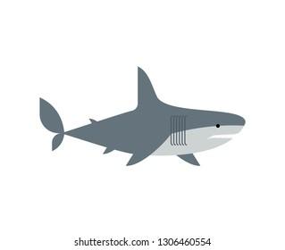 Shark isolated. Marine predator vector illustration. Large predatory sea fish.