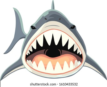 Shark with open mouth and sharp teeth. Vector illustration on white background.
