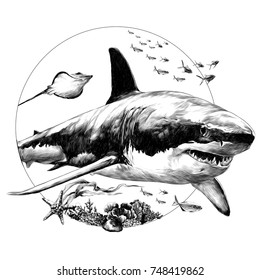 shark sketch for t-shirt vector graphics monochrome black-and-white drawing