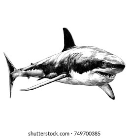 shark sketch vector graphics monochrome black-and-white drawing