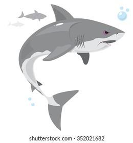 Shark swimming