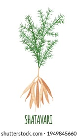 Shatavari icon in flat style isolated on white background. Asparagus racemosus or shatamull. Ayurvedic medicinal plant. Vector illustration