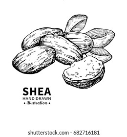 Shea butter vector drawing. Isolated vintage  illustration of nuts, butter and leaves. Organic  oil engraved style sketch. Beauty and spa, cosmetic ingredient. Great for label, packaging design.