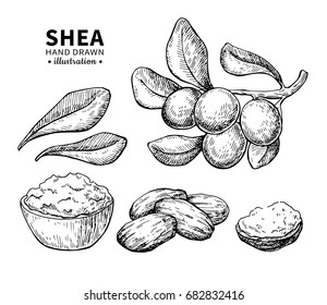 Shea butter vector drawing. Isolated vintage  illustration of berry, nuts, branch. Organic essential oil engraved style sketch. Beauty and spa, cosmetic ingredient. Great for label, poster, flyer, pac