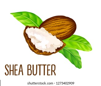 Shea nuts and butter with leaves in vector. Vector shea nuts with shea butter and green leaves.