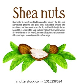Shea nuts and butter with leaves in vector. Vector shea nuts with shea butter and green leaves with a square text frame isolated on a white.