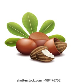 Shea nuts with green leaves vector illustration. Brown shea nut and organic fetus nuts shea