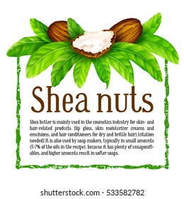 Shea nuts with leaves in vector. Vector shea nuts with shea butter and green leaves in a square text frame isolated on a white.