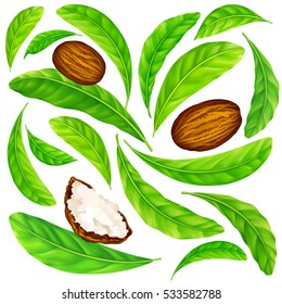 Shea nuts with leaves in vector pattern. Vector seamless pattern of shea nuts with shea butter and green leaves isolated on a white.