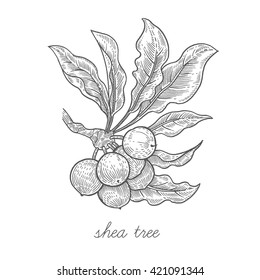 Shea tree. Vector plant isolated on white background. Designed to create package of health and beauty natural products.