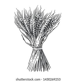 Sheaf of dry wheat. Hand drawn engraving style illustrations.