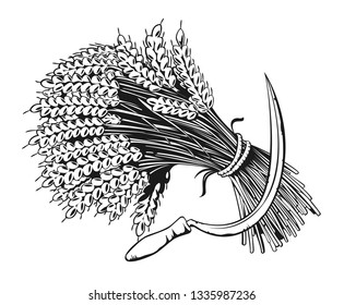 Sheaf of organic wheat and sickle engraving, vector illustration