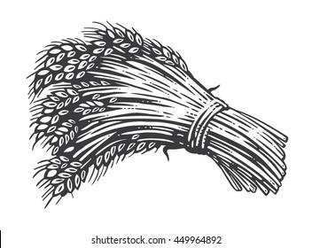 Sheaf of wheat engraving, vector illustration