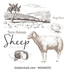 Sheep 3. Sheep breeding. Set of vector sketches on a white background. Sheep grazing in the meadow. Sheep cheese