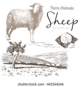 Sheep 4. Sheep breeding. Set of vector sketches on a white background. Sheep grazing in the meadow. Sheep cheese