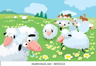 Sheep breeding in high mountains