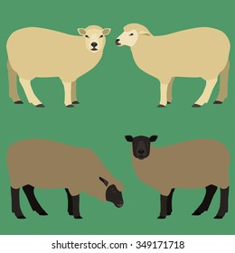 Sheep of different colors vector set.