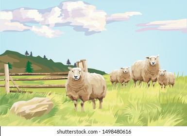 The sheep family in the big green field.