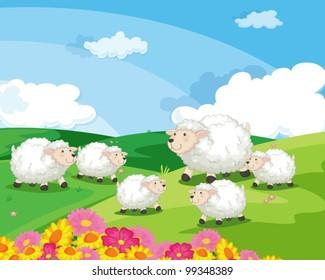 sheep in a field in new zealand