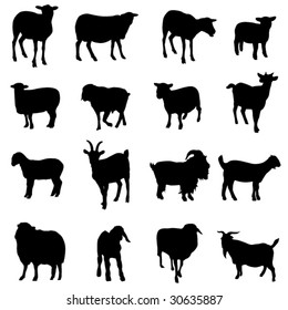 sheep and Goat from all over the world