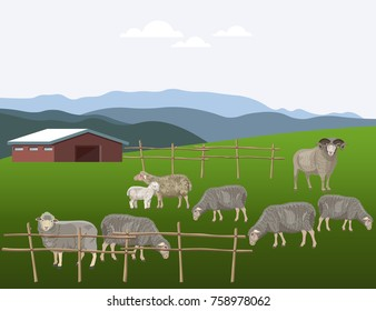 Sheep grazing on pasture. Vector illustration