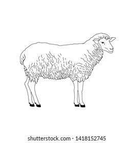 Sheep hand-drawn line art. Isolated on white background. Vector illustration