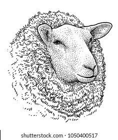 Sheep head portrait illustration, drawing, engraving, ink, line art, vector