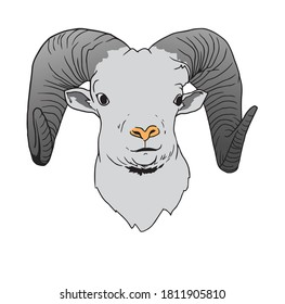 Sheep head with white background.