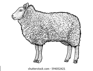 Line Drawing Sheep : Sheep silhouette images stock photos vectors shutterstock