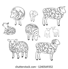 Sheep isolated on white, hand drawn vector illustration. Set