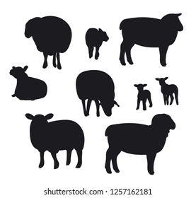 Sheep isolated on white, hand drawn vector illustration.