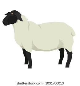 Sheep Isolated vector illustration Farm animals Geometric style