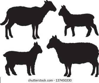 Sheep and lamb vector set of four