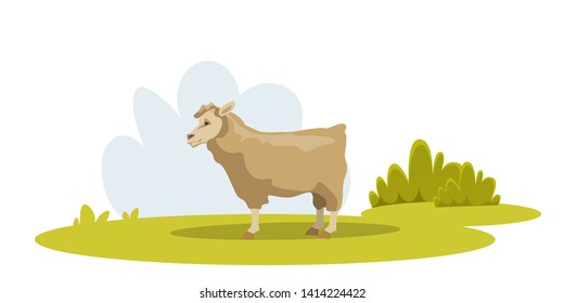 Sheep on green pasture flat vector illustration. Merino lamb traditional farming. Eco, bio wool production industry. Cute ewe on meadow eating grass. Rural area, village domesticated animal