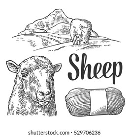 Sheep on meadow and yarn. Hand drawn in a graphic style. Vintage vector black engraving illustration for poster, label. Isolated on white background